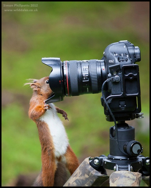 Self Portrait by Simon Phillpotts