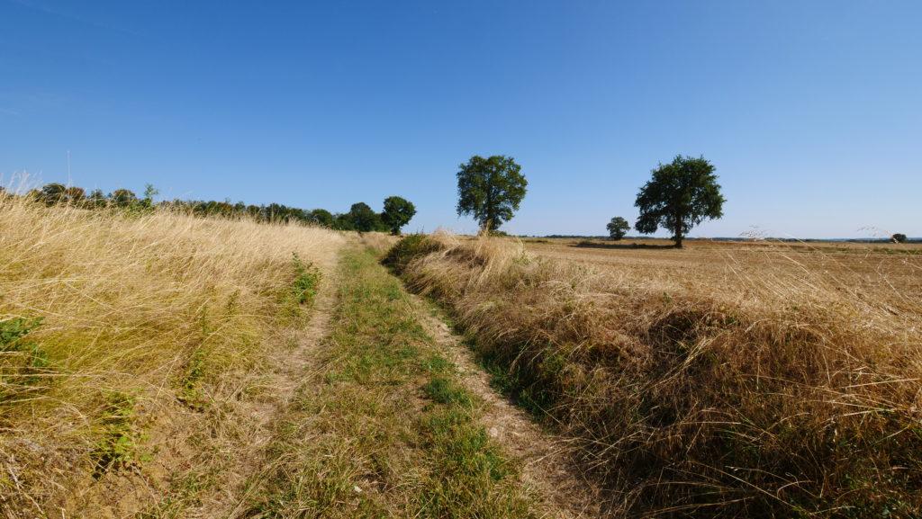 Chemins empruntés à travers champs. 70% de mon parcours était que de chemins, le reste de la toute petite route.